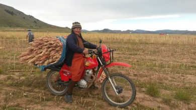 Photo of Sunat: exportaciones de perecibles desde Puno hacia Bolivia crecieron 2,400% de mayo a agosto