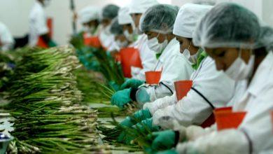 Photo of ¿Cuáles son las condiciones laborales de los trabajadores de la agroexportación?